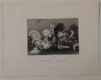 Frans Snyders: Der Hahnenkampf – Stahlstich 1871
